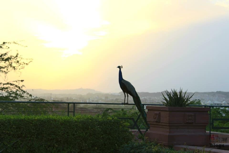 Jodhpur Umaid Bhawan Palace Royal grounds 2